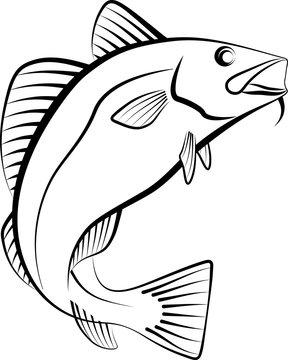 cod fish - clip art illustration
