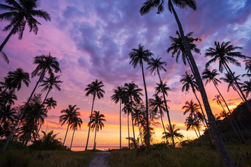 Silhouette of coconut palm tree at sunset on tropical beach