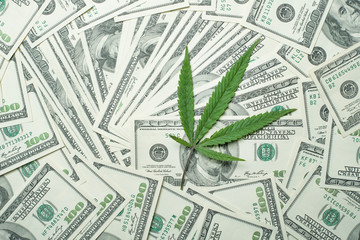 cannabis with money stock photo high quality