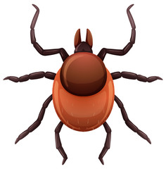 A mite tick on white background
