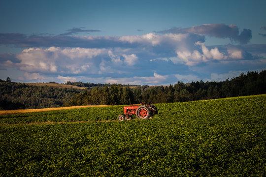 Farmall in the field