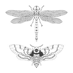 Vector set of hand drawn flying insects. Different insects in realistic style: dragonfly and dead head moth.
