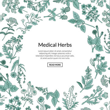 Vector hand drawn medical herbs background with place for text illustration. Herb plant aromatic, botany aroma, healthy and freshness flora