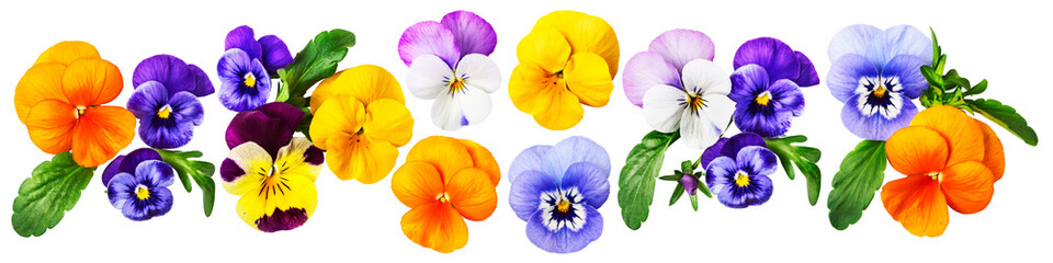 Poster Pansies Pansy viola tricolor flowers set