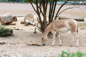 donkey in zoo