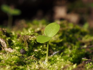 green young sprout on nature background close up