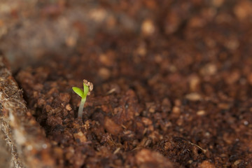 Plant germinating
