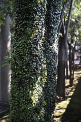 troncs d'arbres recouverts de petites feuilles vertes