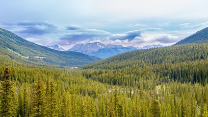 Wall Mural - View at the Canadian nature in Rocky Mountains - Banff,Alberta..