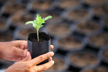 Gardener hand holding young seedling of plant with blurred black container on the background for farming, gardening and food sustainability concept