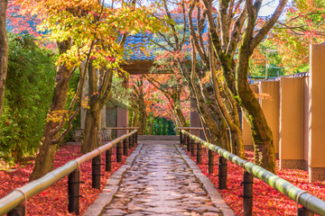 Wall Mural - Kyoto Japan Autumn Path