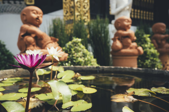 Thailand, Chiang Mai, Buddha statues and pond of water lilies in Wat Inthakhin Sadue Muang temple