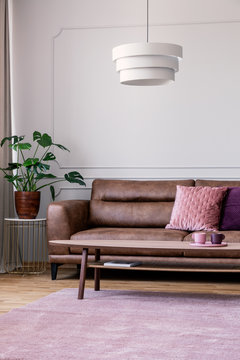 Plant on table next to leather sofa in vintage living room interior with lamp above carpet. Real photo