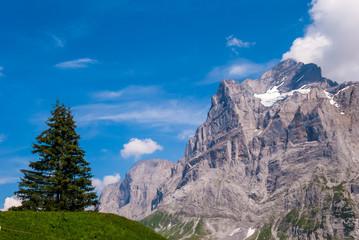 Beautiful Alpine landscape with peak of wetterhorn, Grindelwald, Bernese Oberland, Switzerland, Europe