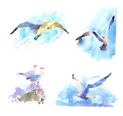 watercolor seagulls set