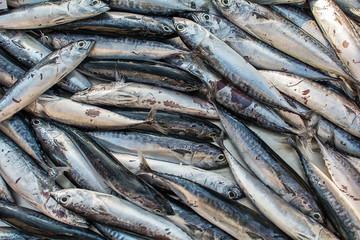 Frozen Sea fish on public market in Greece