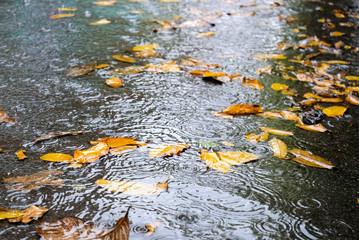 Leaves dry in the water when the rain,Seasonal change ideas