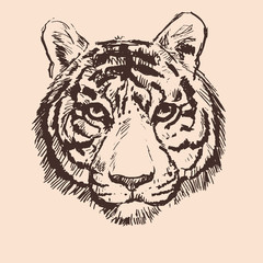 Vector sketch of tiger