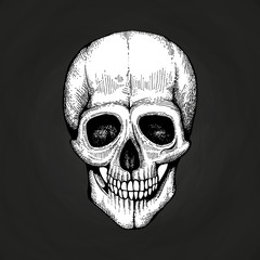 Hand sketched vector death scary human skull isolated on black chalkboard illustration