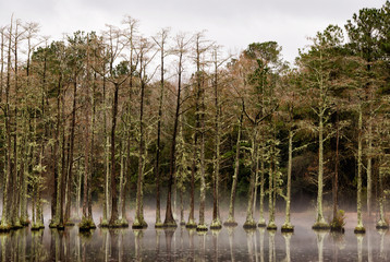 Cypress Mill Pond at Goodale State Park in South Carolina