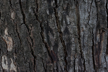 Focus of surface Wood crust or Tree for background and texture.