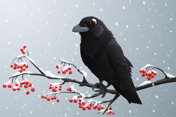 Black raven perched on branch with red berries. Winter season with falling snow. Vector illustration isolated on grey background.