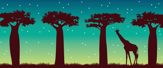 Giraffe, baobabs and night sky. African landscape.
