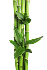 Green bamboo stems with leaves on white background