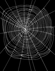 Simple White Spider Web Vector Illustration. Black Background. Lovely Halloween Layout.
