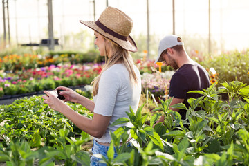 Beautiful young woman taking a photo to the plants with her smartphone and handsome young man gardering in a greenhouse