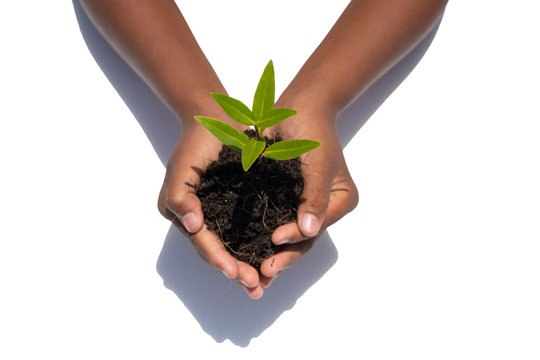World kindness day concept : Human hands holding big tree  isolated on white background