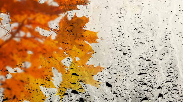 Multicolor maple leaves through the window glass filled with rain. Wet autumn foliage background. Copy space
