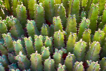 Prickly Natural Background