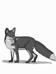 cartoon realistic  fox animal illustration grey colors