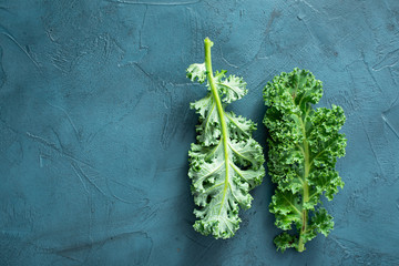 Green kale leaves with copy space on blue background