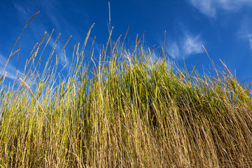 Tuft of grass stand in the sky