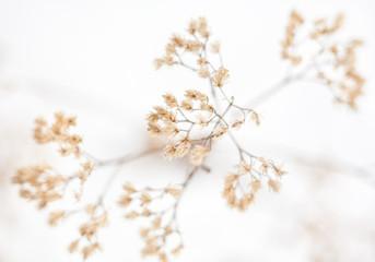 Obraz Withered plant in winter - fototapety do salonu