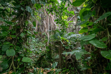 jungle or rainforest, inside tropical forest environment