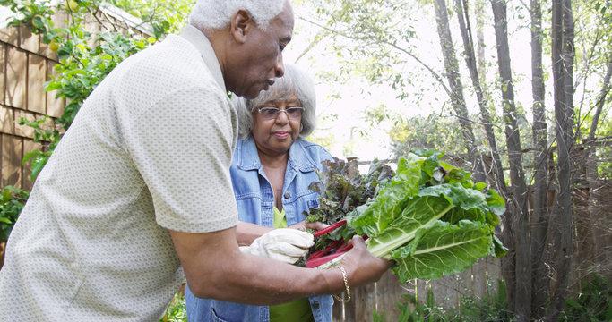 Senior black couple gardening together