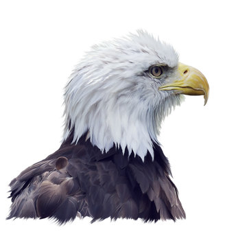 Portrait of Bald eagle watercolor