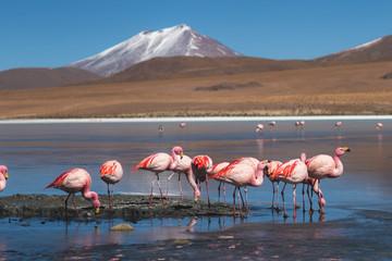 Foto auf AluDibond Flamingo Flamingos on Laguna in Uyuni Bolivia
