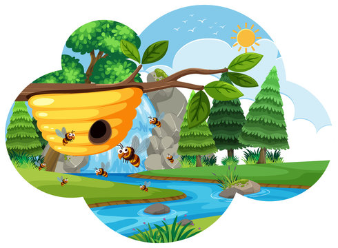 A beehive in nature
