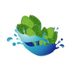 Spinach Healthy Natural Vegetable in Fresh Water Splash