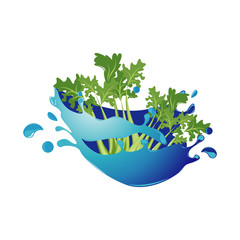 Celery Healthy Natural Vegetable in Fresh Water Splash