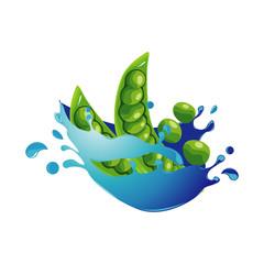 Pea Bean Healthy Natural Vegetable in Fresh Water Splash