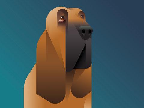 Illustration of hound dog