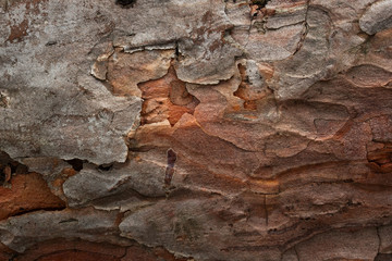 colorful pine bark texture closeup with cracks natural background Fototapete