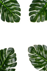 Beautiful floral background of tropical tree leaves monstera and palm, with a space for a text, flat lay composition Summer, exotic, travel, paradise, beauty concept Top view Copy space