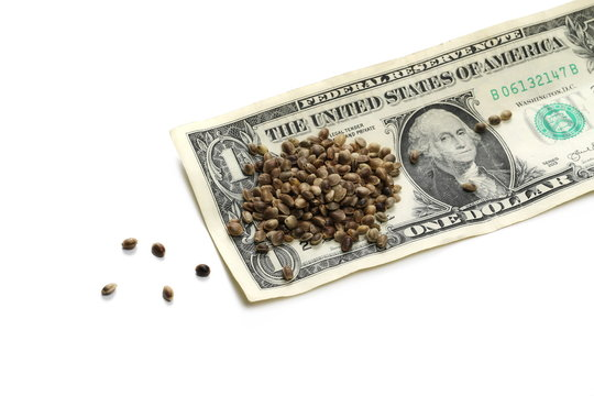Hemp seeds and dollar bill, banknote isolated on white background