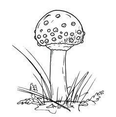 Drawing of poisonous mushroom - hand sketch of fly agaric, black and white illustration